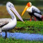 La découverte de quelques sites protégés du Sri Lanka