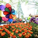 Les festivals printaniers incontournables de la Corée du Sud