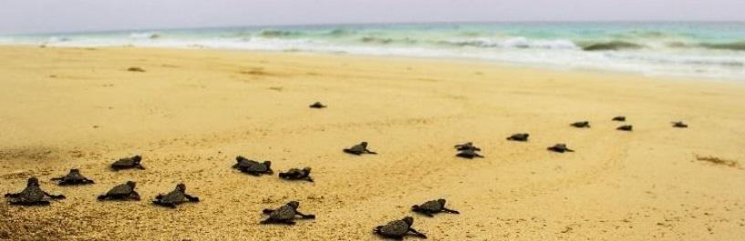 Tortues sur une plage