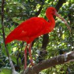 La Malaisie, une destination idéale pour les amoureux de la nature